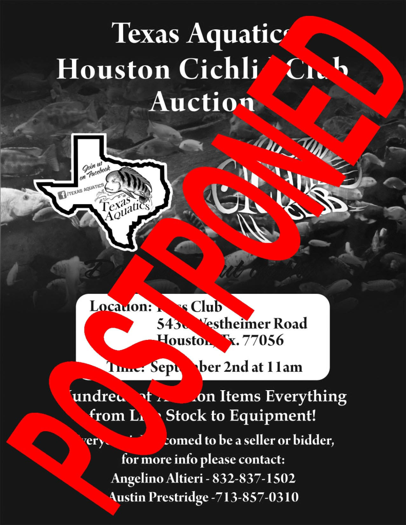 HCA Auction Cancelled